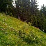 Gasthof Waldruhe Foto