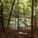Maritime forest swamp