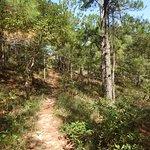 Trail, sand+pine needles