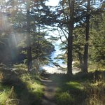 On the trail to Cape Disappointment Lighthouse
