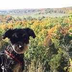 A beautiful October day for a hike at Rattlesnake with our wee Schnoodle