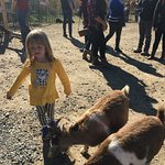 Feeding the goats at he petting zoo