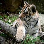 Foto di Henry Doorly Zoo