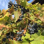 Private vineyard