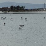 Flamings near the Theoxenia