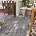 Family of cats roaming free