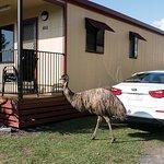 The park emu on her stroll