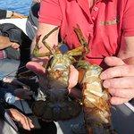 presentation des homards pêchés