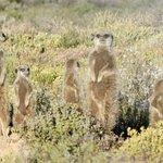 Meerkat Adventures Foto
