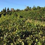 Photo de Agriturismo Niccolai Torre Palagetto