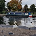 Canal boats and swans