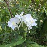 State Botanical Garden of Georgia Foto