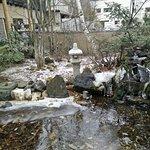 Frozen garden from room