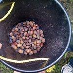 Picking my hazelnuts
