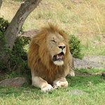 Foto de Fairmont Mara Safari Club