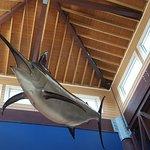 Marlin over the bar