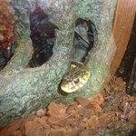 Snake in Nature indoor center