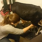 Milking goats with Sarah!