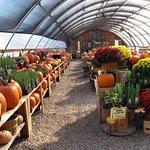 Indoor greenhouse area