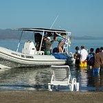 Danzante Island tour with Captain Ramses.