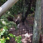 Photo de Naples Zoo at Caribbean Gardens