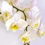 Photo of Orchidee De Chine