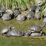 Stacker turtles