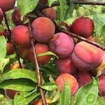 Tabora Farm and Orchard