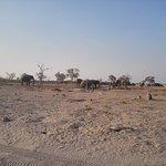 Male elephants