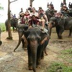 Photo de Siam Safari