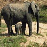 Makweti Safari Lodge Foto
