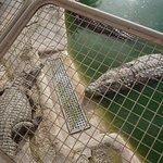 Krokodilfarm Animalia Foto