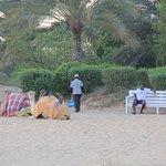 Camel ride area.