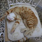 Rex the Hotelcat <3