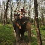 Photo of Kok Chang Safari Elephant Trekking