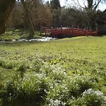 Snowdrops at Heale House