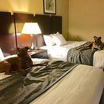Comfortable, clean and dog friendly.  Super comfortable beds, room clean along with nice selecti