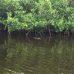 Capt Mitch's - Everglades Private Airboat Tours Foto