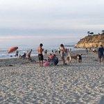 Dog Beach Photo