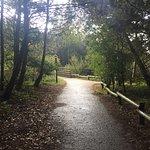 Foto de Center Parcs Sherwood Forest