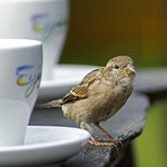 Invite the sparrows
