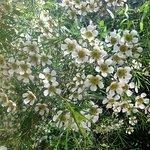 Wildflowers galore.