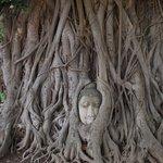 Sooking Budda embedded in tree roots