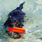 Our dog Chase swimming in the Sea of Cortez