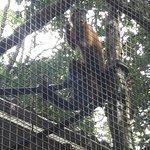 Tropical Manaus Ecoresort Foto