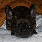 It is also important to note that this hotel is pet friendly. (Our French bulldog Nugget)