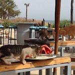 Paradis Plage Taghazout Insalubre , malodorant et inadmissible !!!! Une horde de chats dégoutant