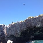 Observing Booby Birds on Marietas Island Eco Adventer