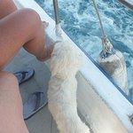 Alex (le chien), notre accompagnateur lors d'une sortie en mer