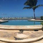Foto de Villas Flamingos